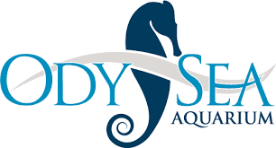 Odysea Aquarium in Arizona - LOGO